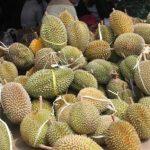 Memperbaiki Rasa dan Kualitas Buah Durian