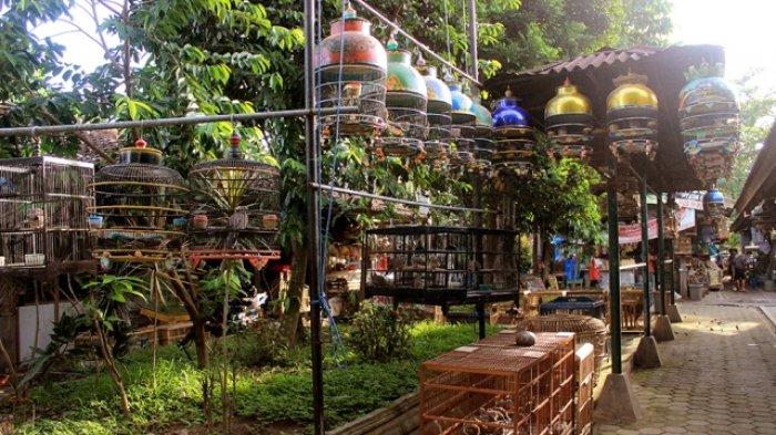 Pasty Pasar Satwa dan Tanaman Hias Yogyakarta