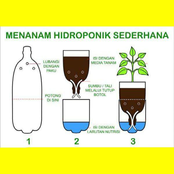 Tips dan Cara Membuat Tanaman Hidroponik dari Botol Bekas