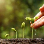 Tips Tata Cara Sukses Penyemaian Seed / benih