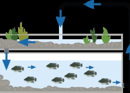 Aquaponik