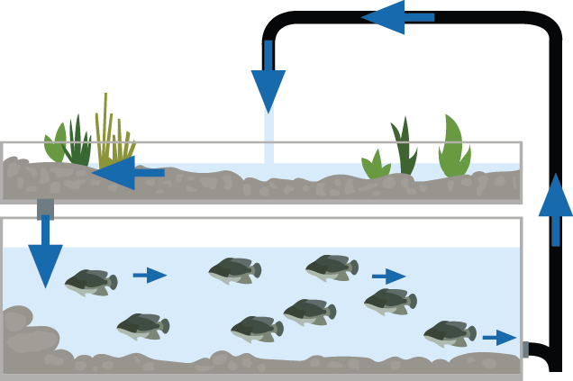 Apa itu Aquaponik dan Kelebihannya