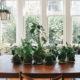 Tips Tanaman Hias Untuk Interior Rumah Anda
