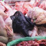 Ayam Cemani Meat – Bagaimana Rasa Ayam Cemani Jika Dimasak?