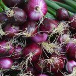 Tips Cara Menanam Bawang Merah Menggunakan Pot atau Polybag