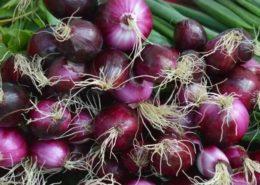 cara budidaya bawang merah dalam pot