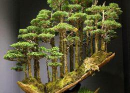 cara membuat budidaya tanaman bonsai
