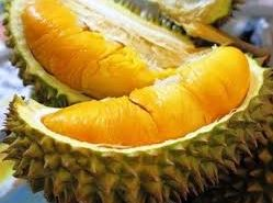cara menanam budidaya durian musang king