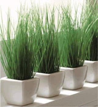 cara menanam bunga bambu air