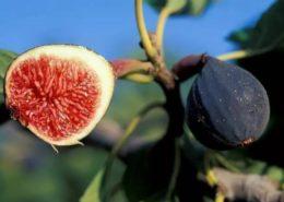 tips cara menanam pohon