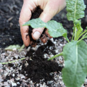 cara membuat pupuk kompos ampas kopi