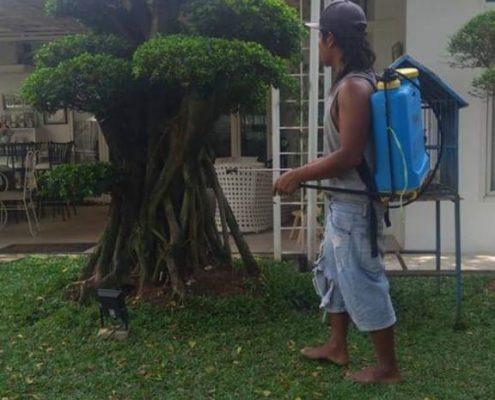 jasa pembuatan taman minimalis di Jogja (1)